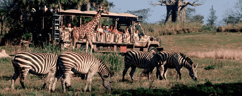 Safari no Parque Disney Animal Kingdom