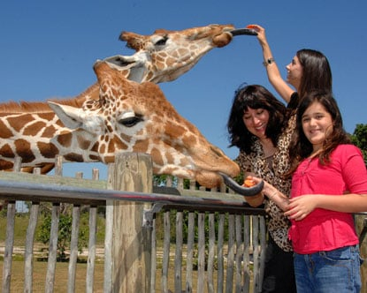Zoo Miami: O maior zoológico da Flórida