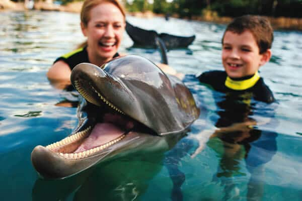 Discoery Cove Orlando - Golginho Dolphin Lagoon