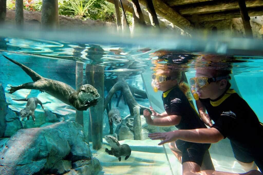 Discovery Cove Orlando - Parque Aquático