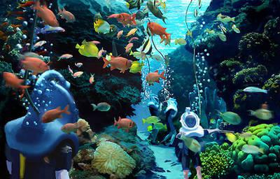Parque Discovery Cove Orlando - SeaVenture