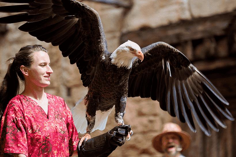 Flights of Wonder no Animal Kingdom