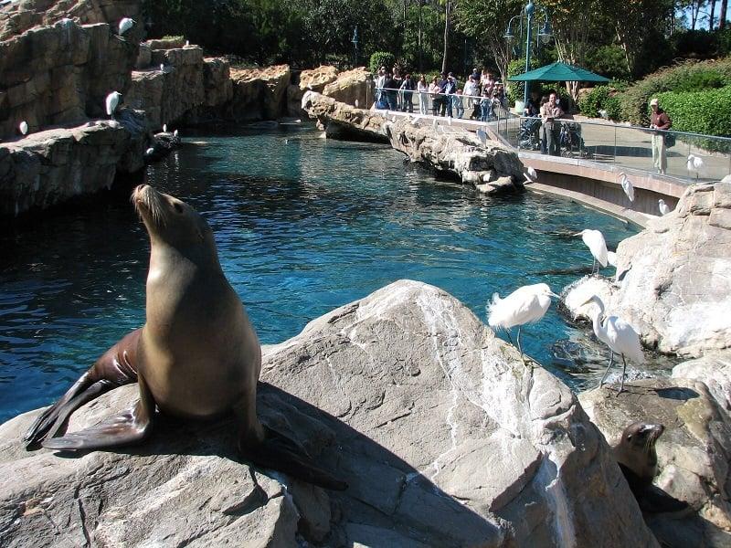 Pacific Point Preserve no Sea World em Orlando