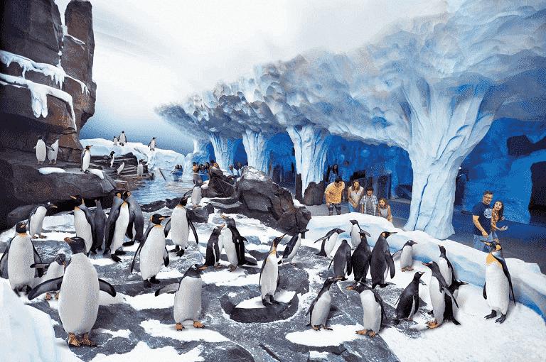 Detalhes sobre o Antarctica no Sea World