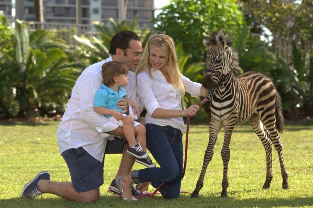Shows com animais no Jungle Island