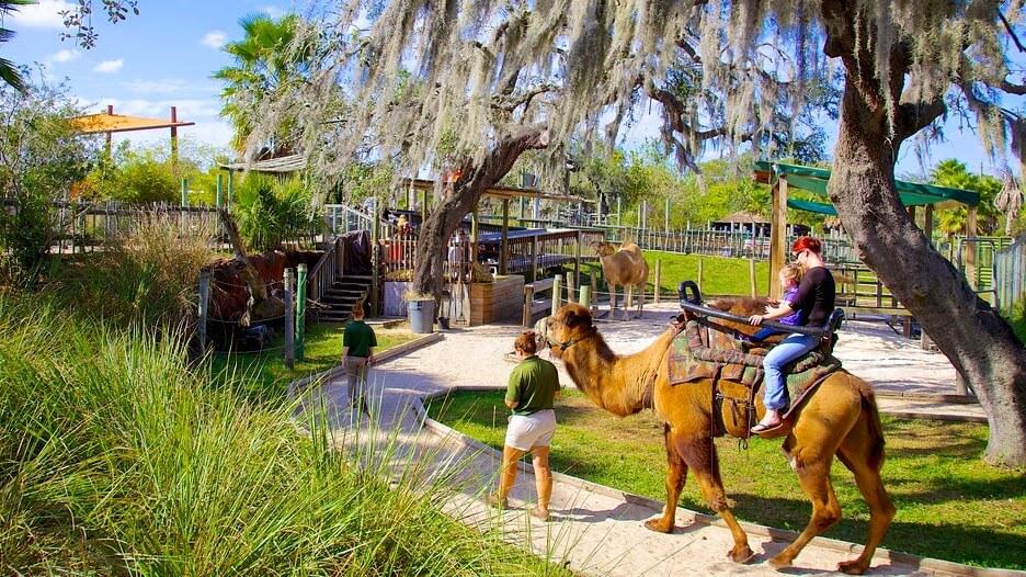 Lowry Park Zoo Tampa Florida