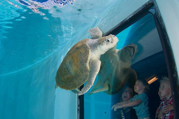 Florida Aquarium em Tampa
