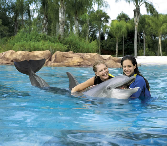 Dolphin Cove no Sea World em Orlando