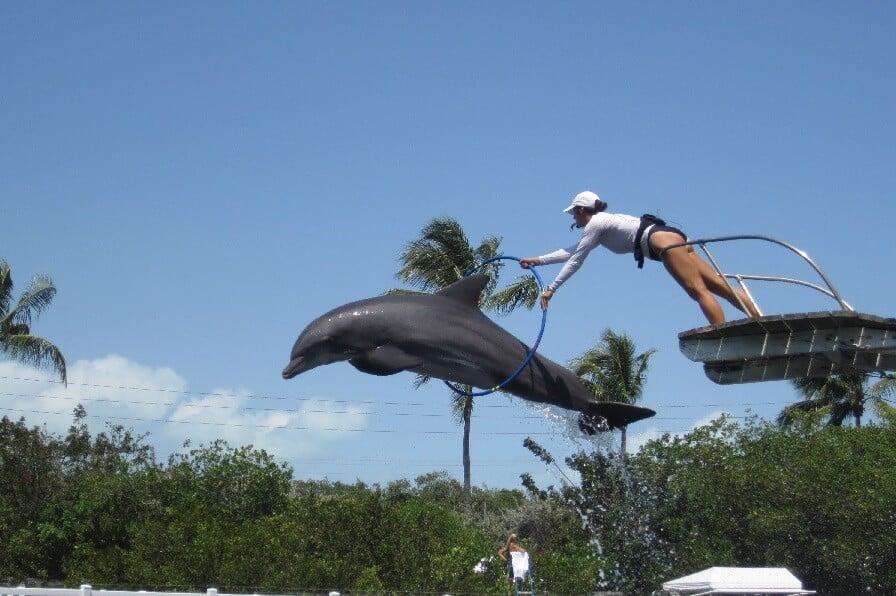 Theater of the Sea nas ilhas Keys em Miami