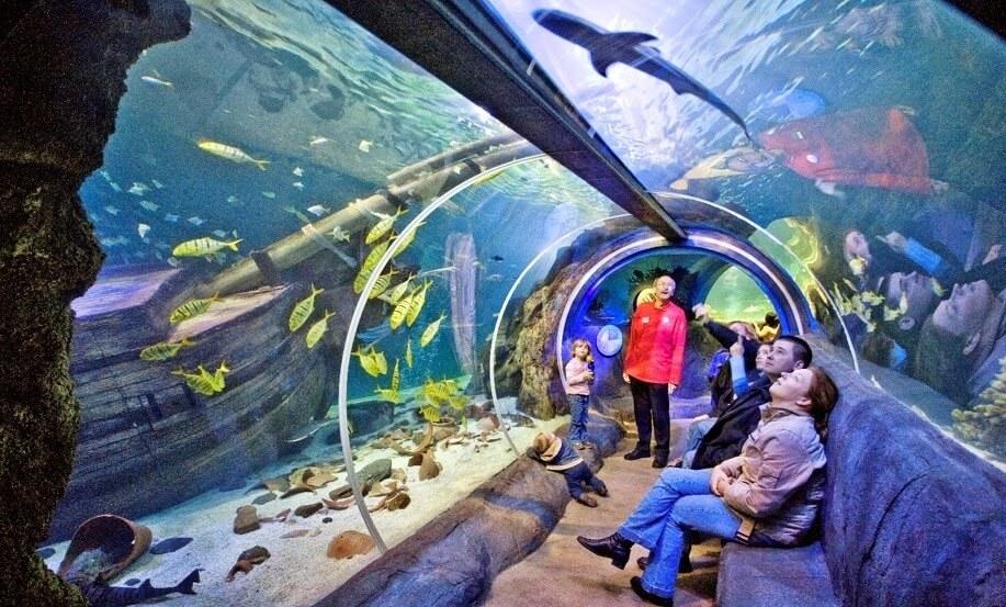 Aquário Sea Life Orlando no I Drive 360