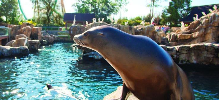 Leão marinho no SeaWorld