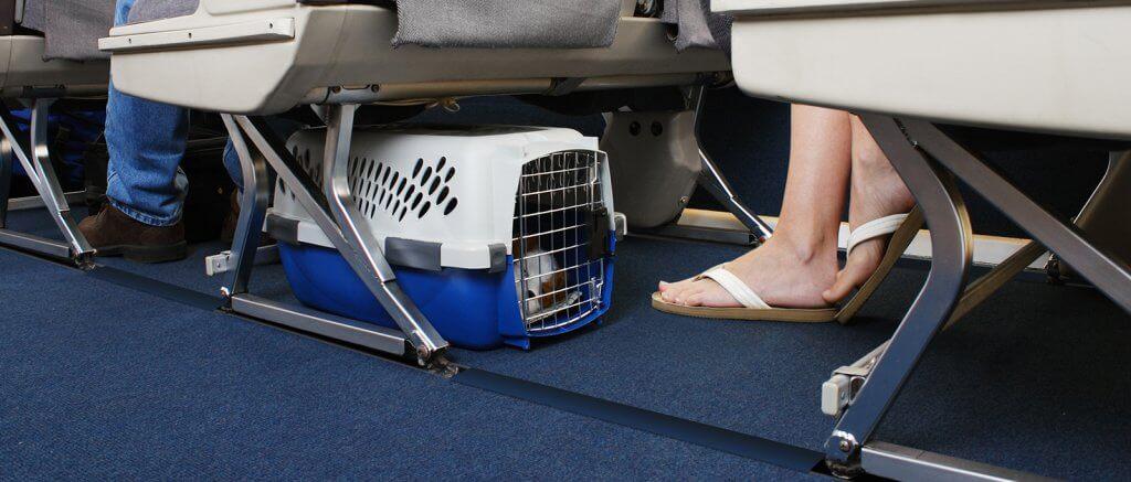 Viajando com seu gato de estimação