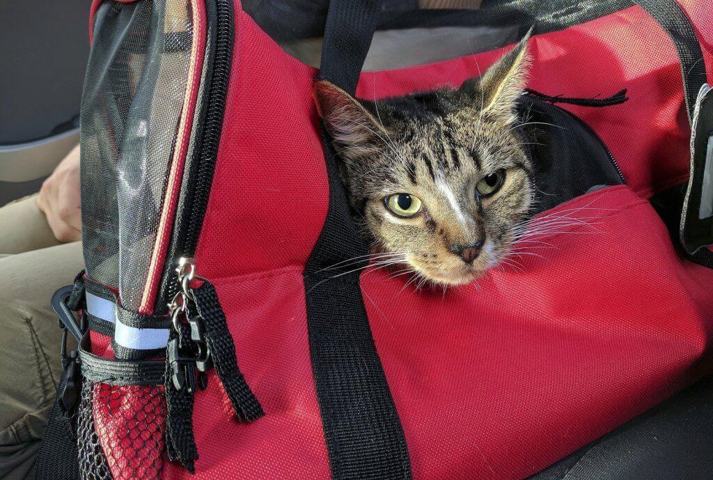 Casinha para viajar com seu gato de estimação