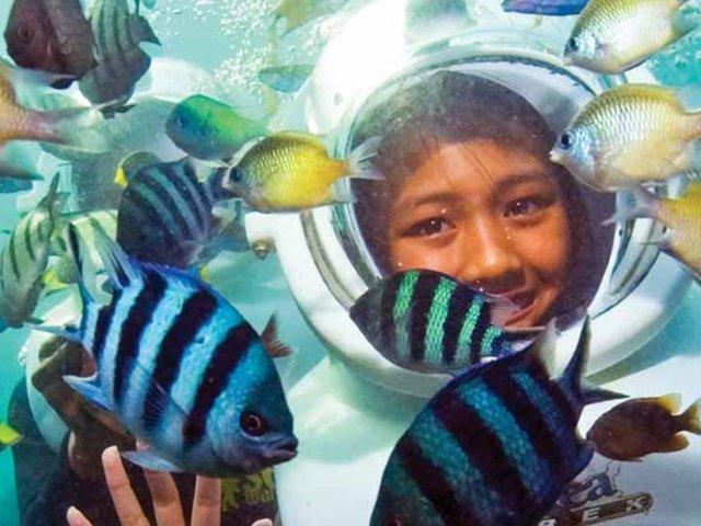 Mergulho Sea Trek no Seaquarium Miami
