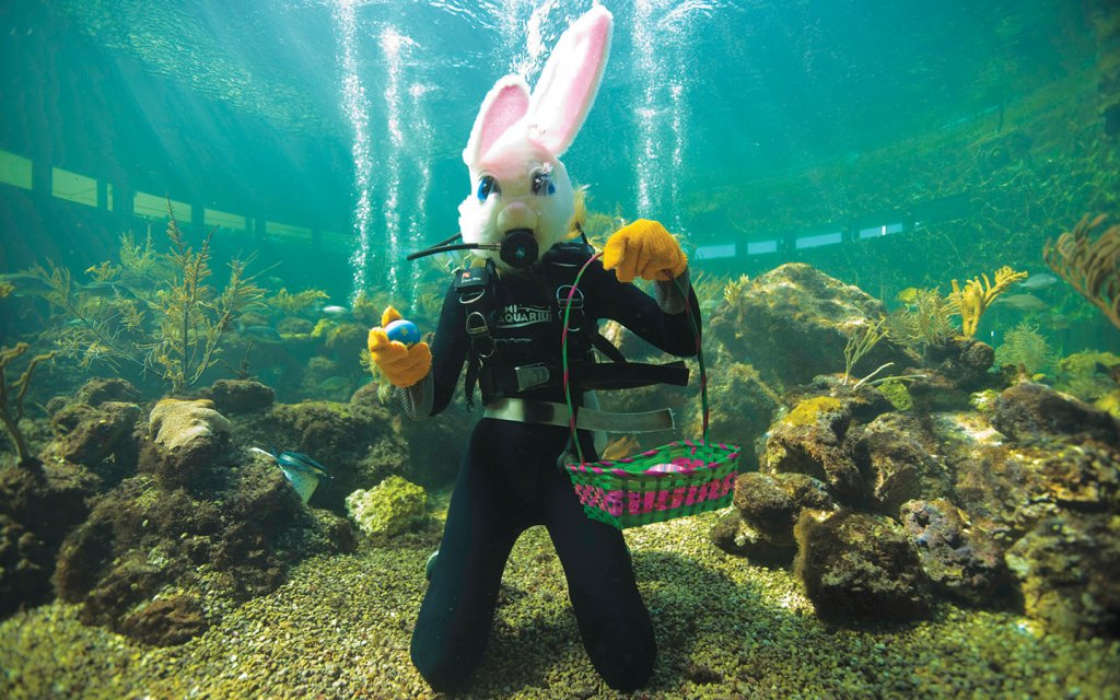 Páscoa no Mergulho Sea Trek no Seaquarium Miami