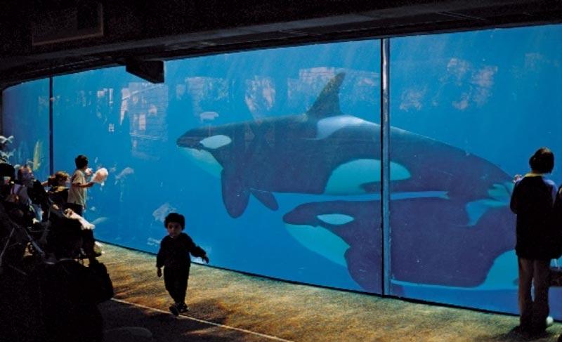Aquário com baleias: tours nos bastidores do SeaWorld Orlando