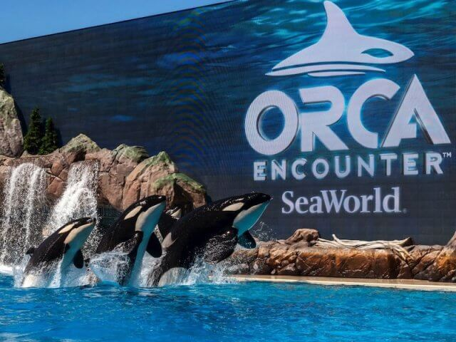 Show Orca Encounter no SeaWorld em Orlando