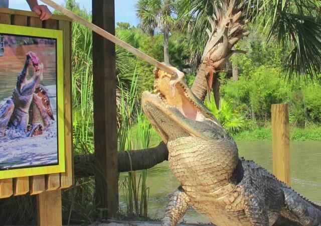 Parque dos jacarés Wild Florida Airboats & Gator